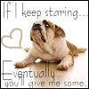 Begging Bulldog
