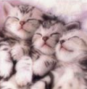 sleepies